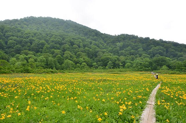 Tanashiro Marshland